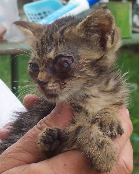 Egy szemfekélyes cica